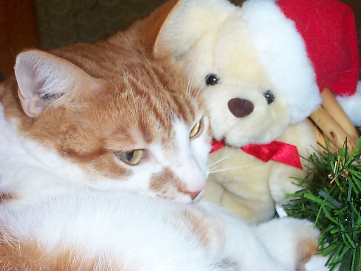 Curled up in basket of pine and stuffed animals was Tigger. Visions of ??? danced in his head.... Christmas past, 2003 to be exact, was when this image of our beloved Tigger was captured.  HAPPY HOLIDAYS TO ALL.