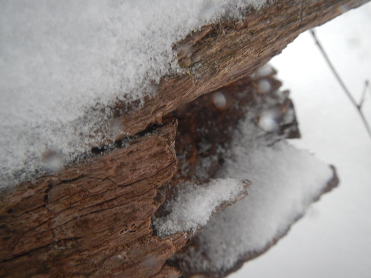 One more log in the snow image. copyright 2015 Pamela Breitberg