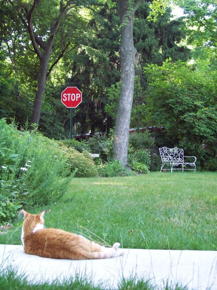 Tigger, stopping to enjoy life.  copyright 2008, Pamela Breitberg