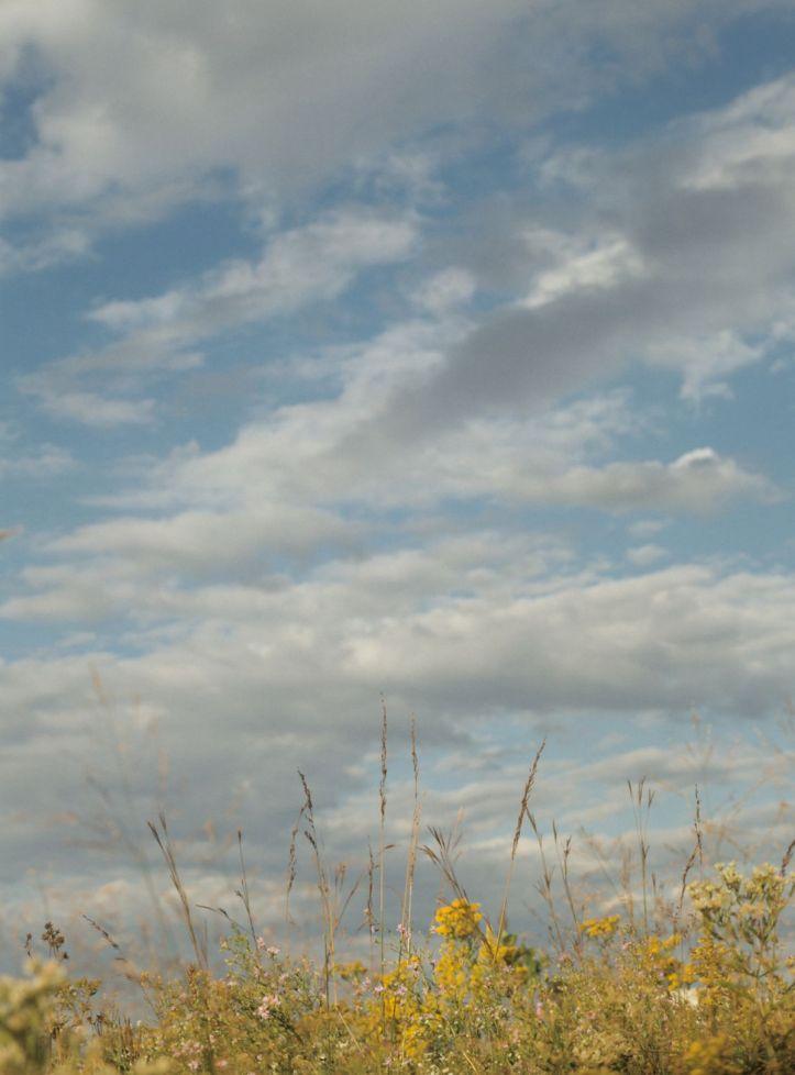 Skies over restored mesic prairie at Chicago Botanic Gardens, copyright 1991, Pamela Breitberg
