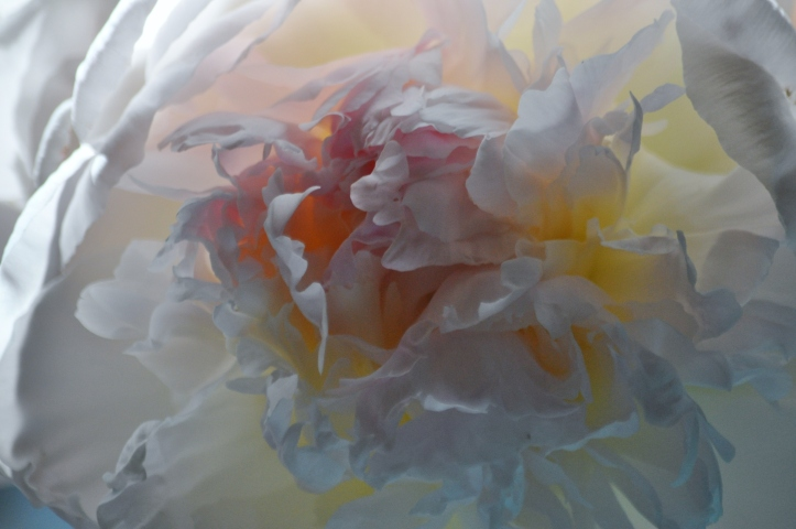 Blushing Peony layers. Copyright 2015, Pamela Breitberg