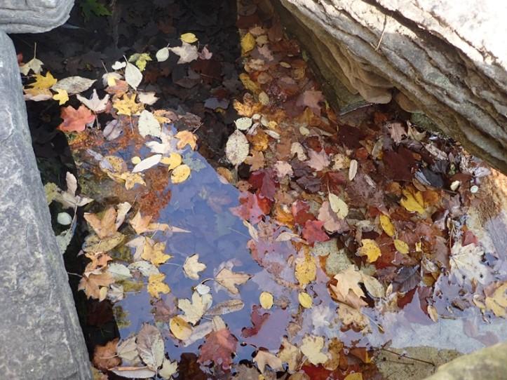 Floating and sunken autumn leaves. Copyright 2016 Pamela Breitberg