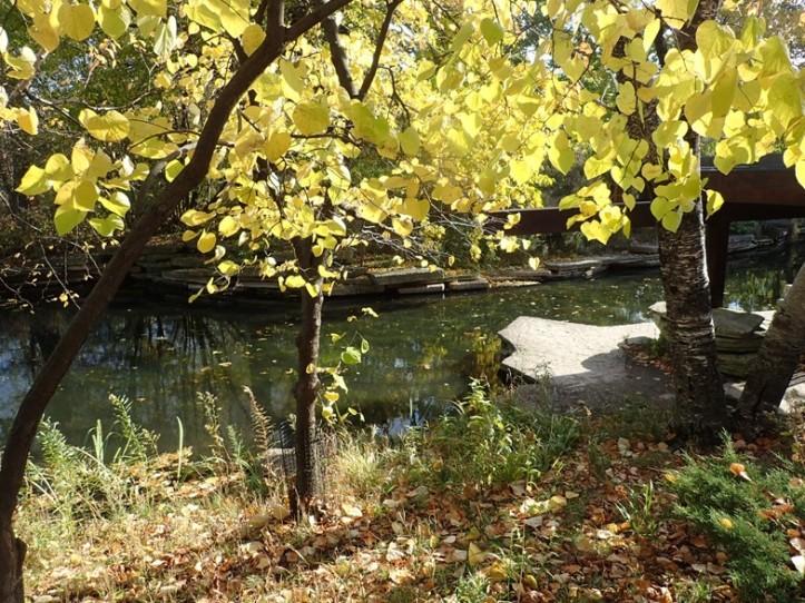 Albert Caldwell Lily Pond adjoining Lincoln Park Zoo. Copyright 2016, Pamela Breitberg