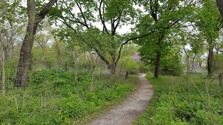 Wilderness inside Lincoln Park, Chicago. Copyright 2017, Pamela Breitberg